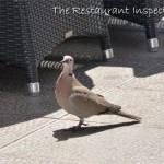 The Restaurant Inspector