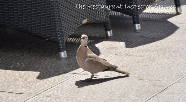 restaurant inspector